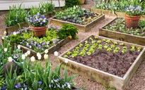 16 ý tưởng làm vườn độc đáo và hữu ích