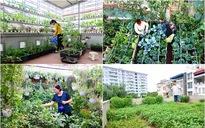 4 vườn rau sạch trên sân thượng giữa chốn thủ đô khiến chị em mê tít