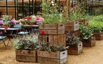 8 mẹo hay giúp khu vườn nhỏ nhà bạn thêm hoàn hảo