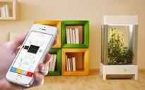 Ấn tượng với cách chăm sóc sân vườn đơn giản bằng smartphone