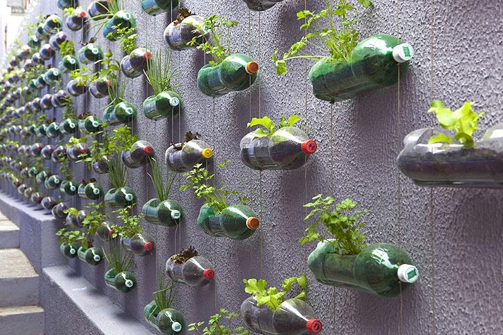 Thiết kế vườn treo tiết kiệm không gian từ vỏ chai nhựa