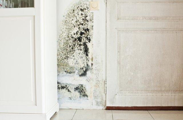 Nhà bị ẩm mốc phải làm sao để xử lý hiệu quả nhất?