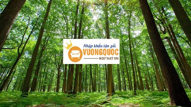 TOP các loại gỗ tự nhiên dùng trong nội thất bền nhất